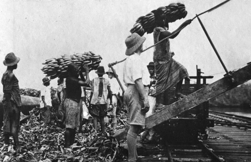Bananas being loaded for export to Germany ca. 1911