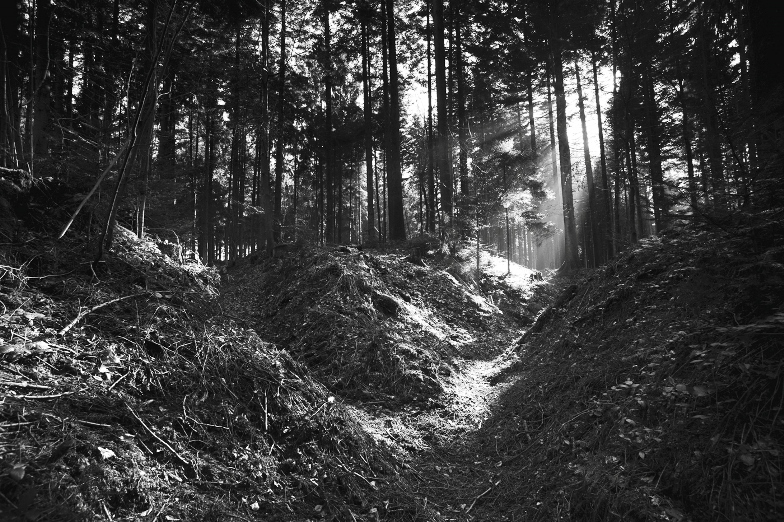 A German trench in the Argonne