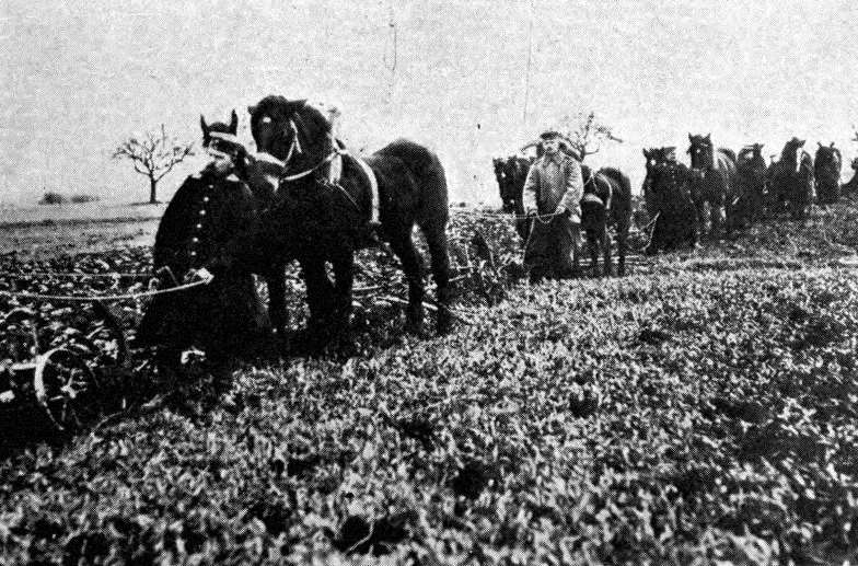 German cavalrymen turn their horses to plowing fields in occupied territory to relieve the home front from the burden of feeding them