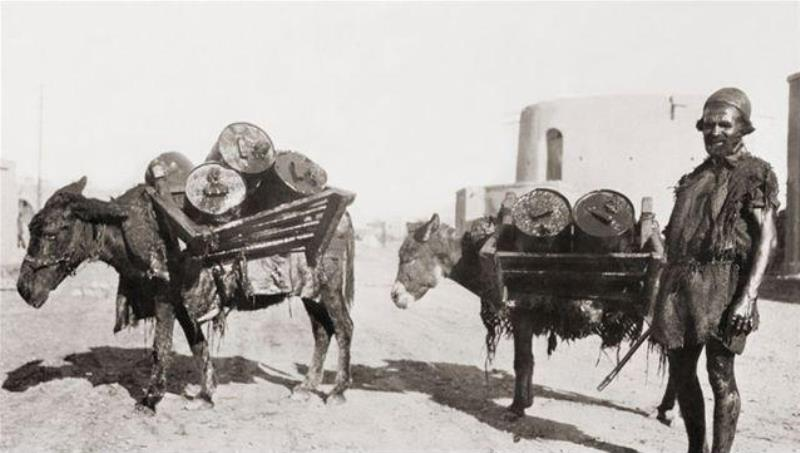A 1910 photo of oil being moved by donkeys before pipelines were laid