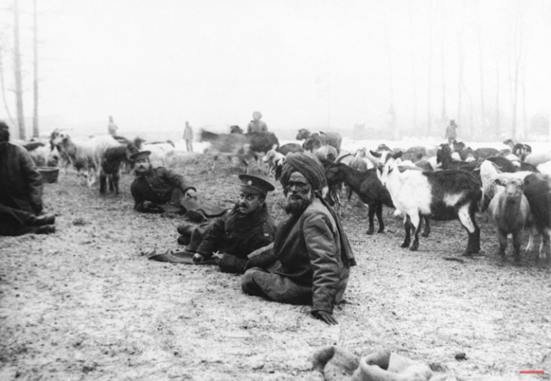 A herd of goats on the Yser River. The only meat fed to the Indian troops, these animals were brought with them from the subcontinent